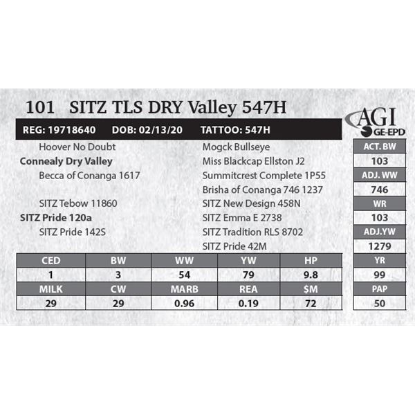 Sitz TLS DRY Valley 547H