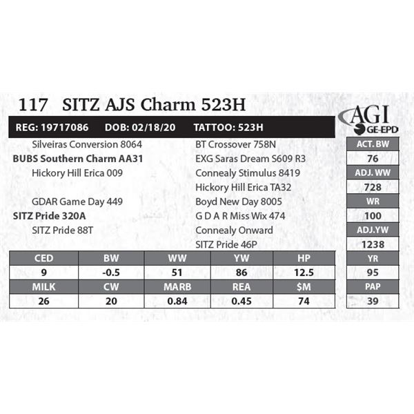 SITZ AJS Charm 523H