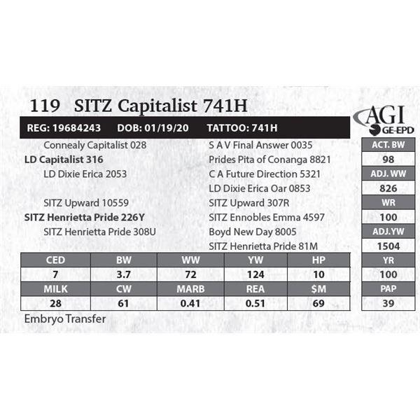 SITZ Capitalist 741H