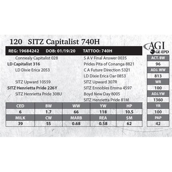 SITZ Capitalist 740H