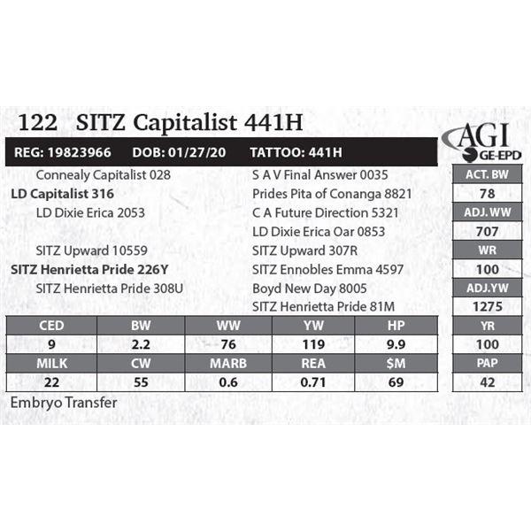 SITZ Capitalist 441H