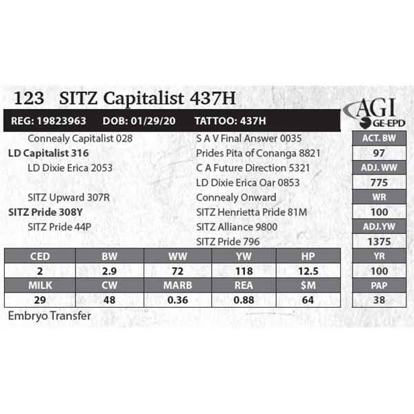 SITZ Capitalist 437H