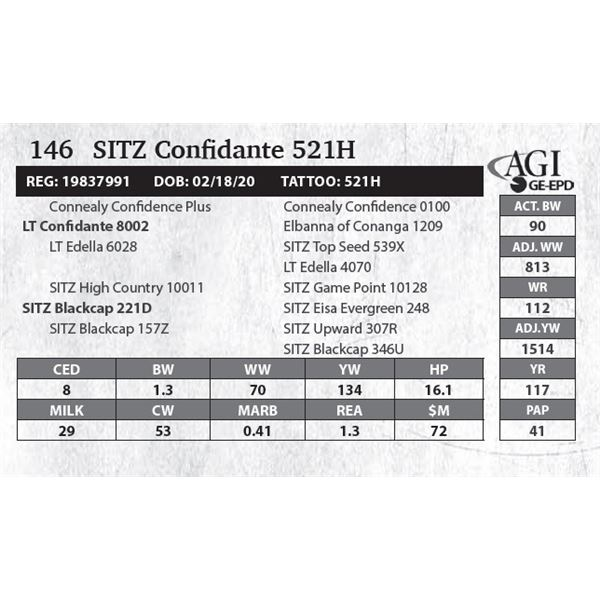 Sitz Confidante 521H