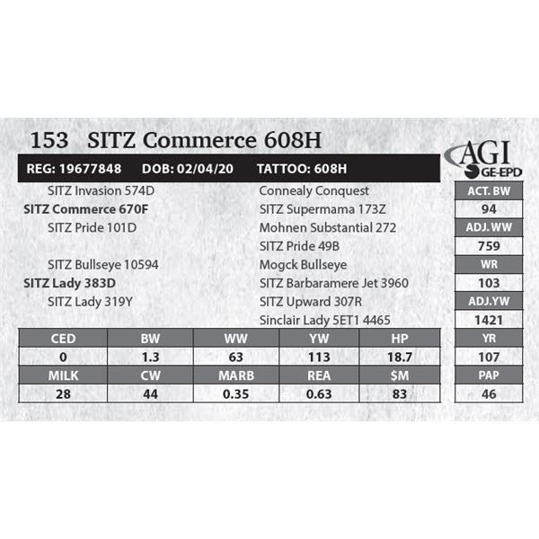 SITZ Commerce 608H