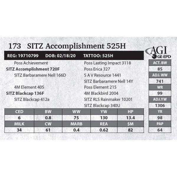 SITZ Accomplishment 525H