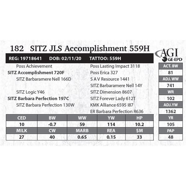 Sitz JLS Accomplishment 559H