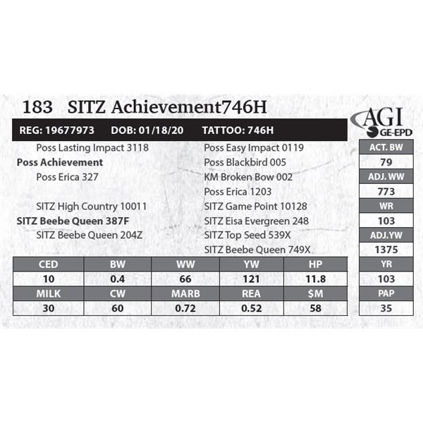 SITZ Achievement746H
