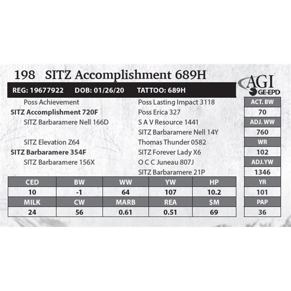 SITZ Accomplishment 689H