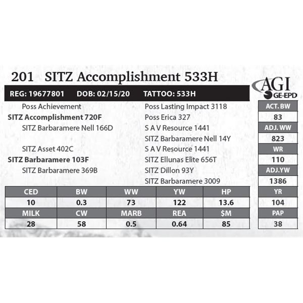 SITZ Accomplishment 533H