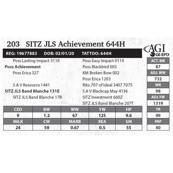 SITZ JLS Achievement 644H
