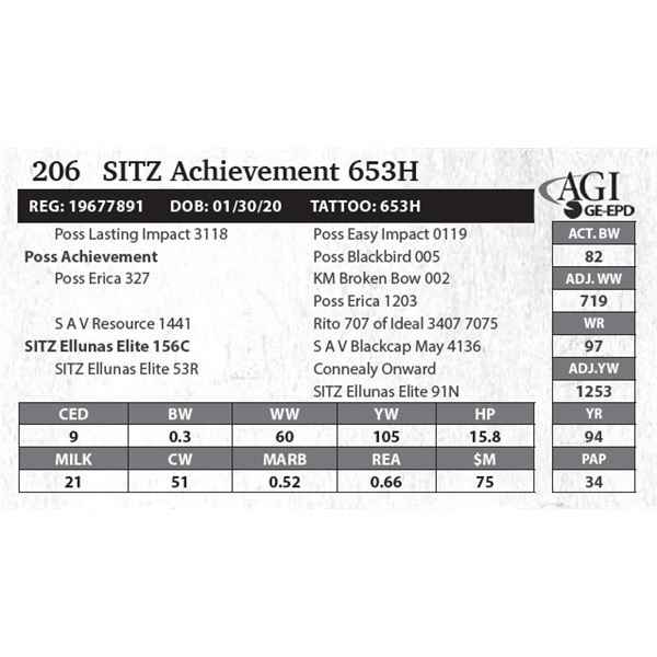 SITZ Achievement 653H