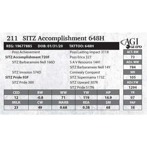 SITZ Accomplishment 648H