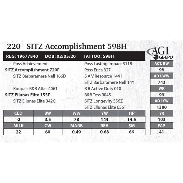 SITZ Accomplishment 598H