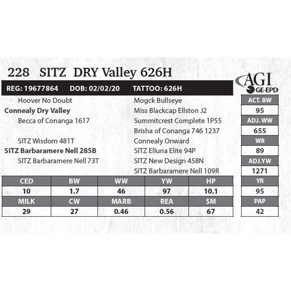 Sitz  DRY Valley 626H