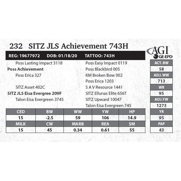 SITZ JLS Achievement 743H