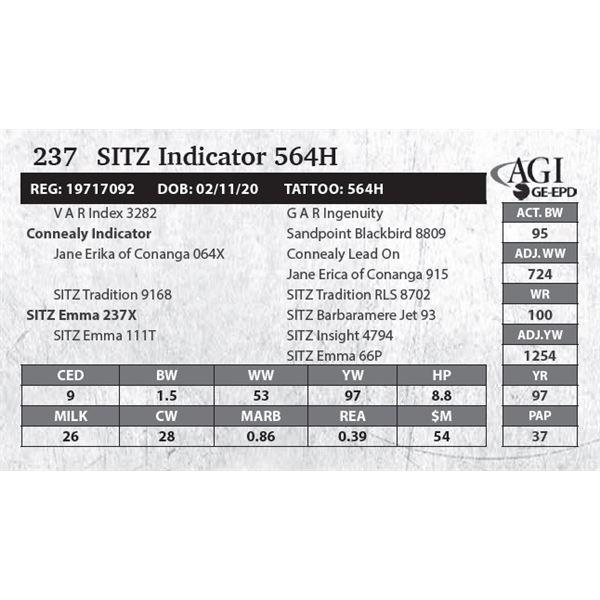 Sitz Indicator 564H