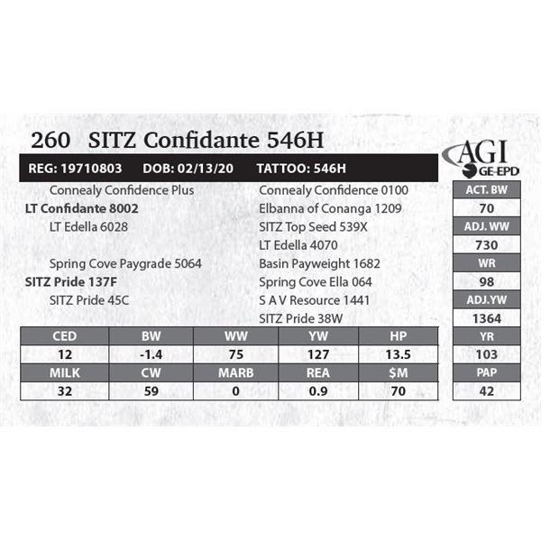 SITZ Confidante 546H