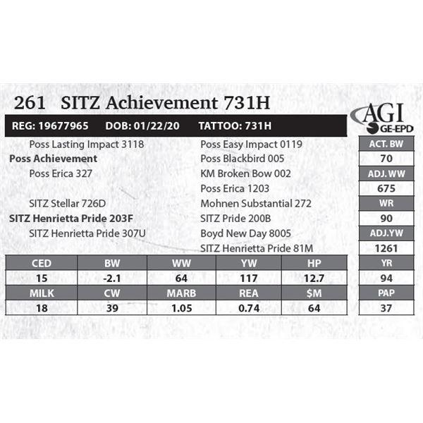 SITZ Achievement 731H
