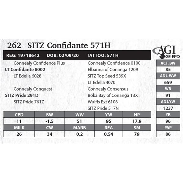 Sitz Confidante 571H
