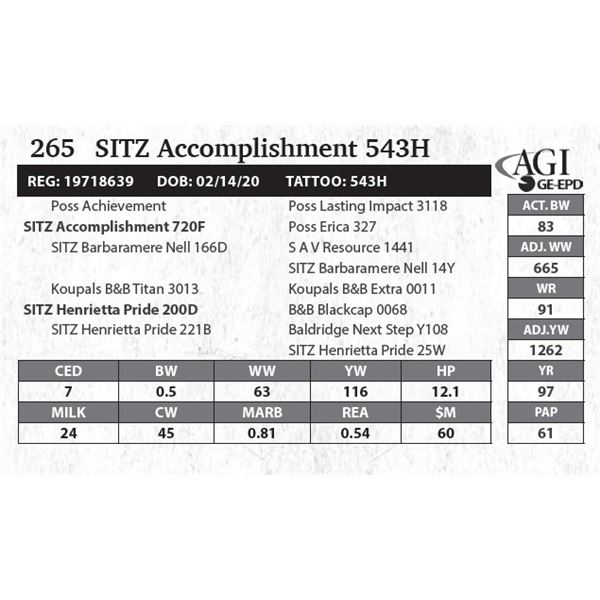 Sitz Accomplishment 543H