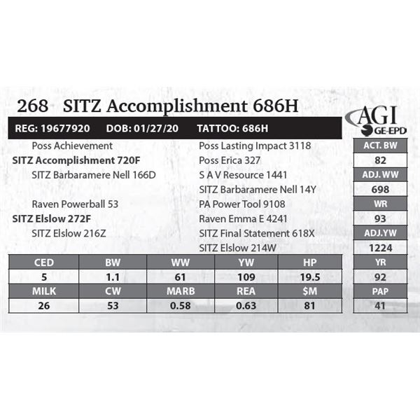 SITZ Accomplishment 686H