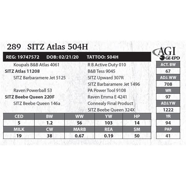 Sitz Atlas 504H