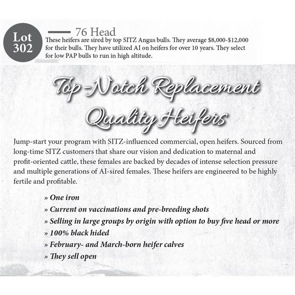 76 hd Open Replacement Heifers