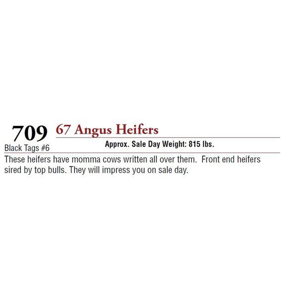 67 ANGUS HEIFERS