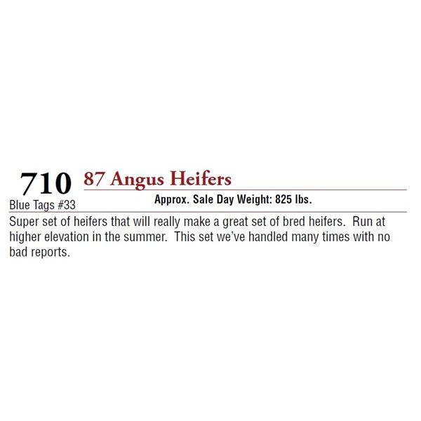 87 ANGUS HEIFERS