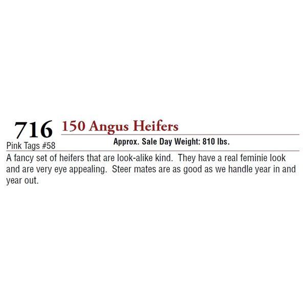 150 ANGUS HEIFERS