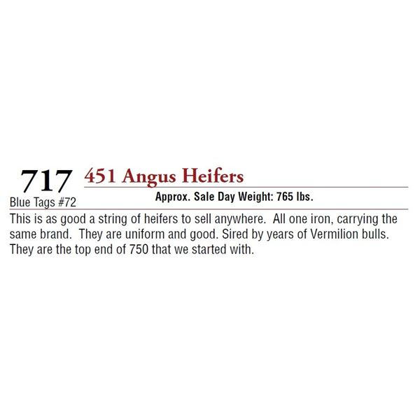451 ANGUS HEIFERS