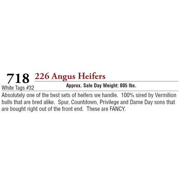 226 ANGUS HEIFERS