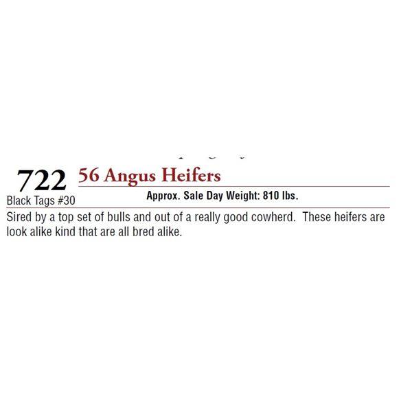 56 ANGUS HEIFERS