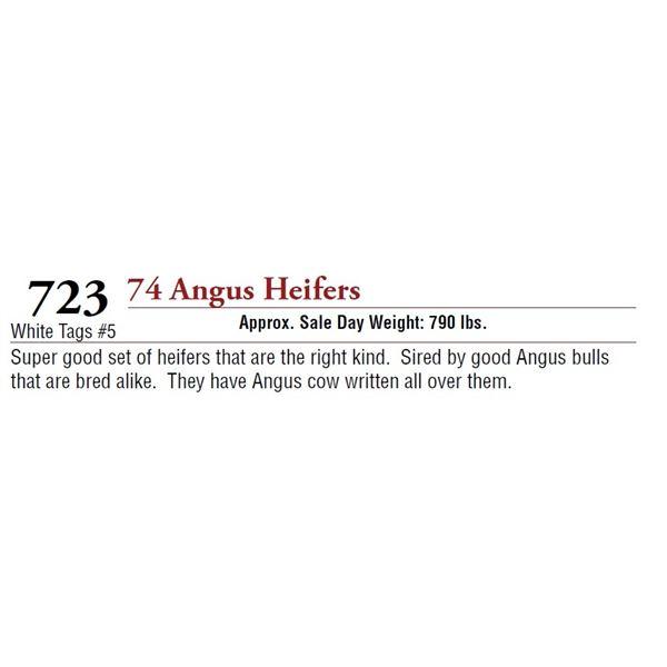 74 ANGUS HEIFERS