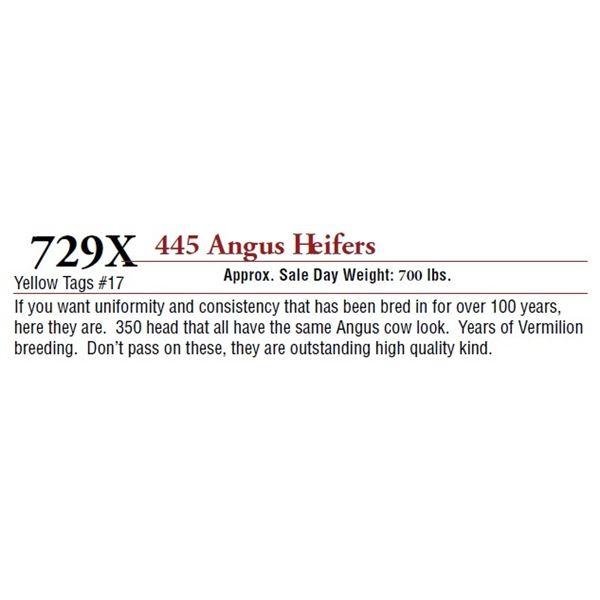 445 ANGUS HEIFERS