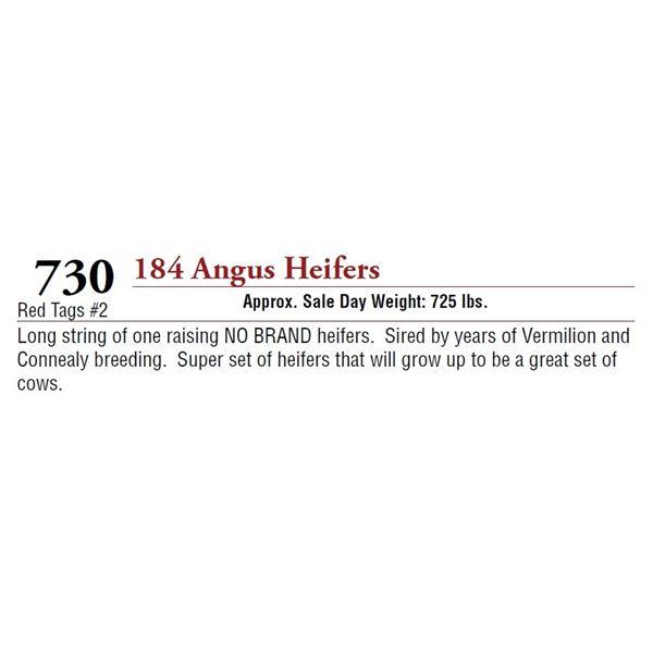 184 ANGUS HEIFERS
