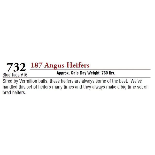 187 ANGUS HEIFERS
