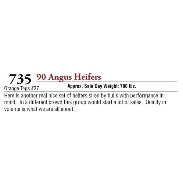 90 ANGUS HEIFERS