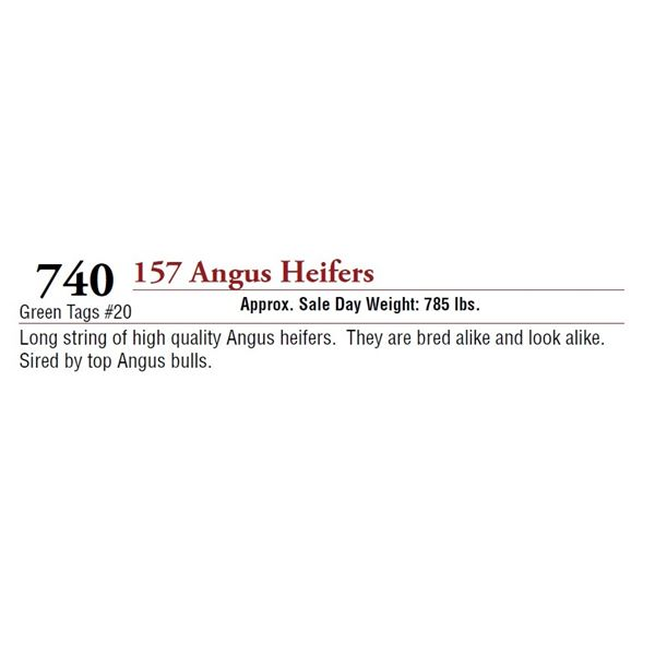 157 ANGUS HEIFERS