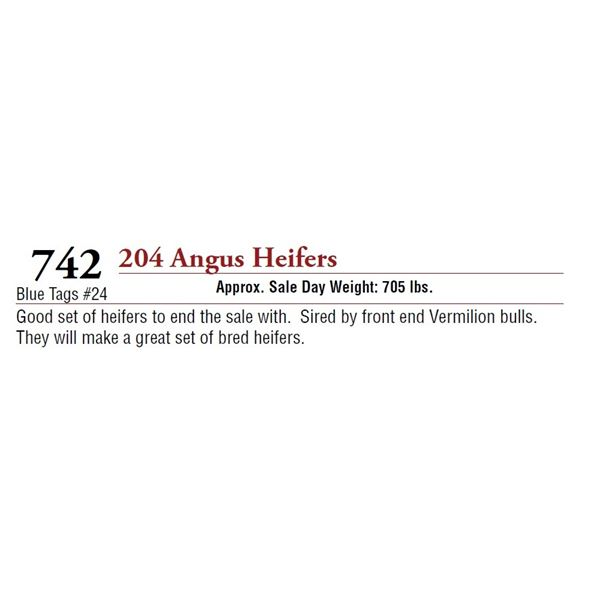 204 ANGUS HEIFERS