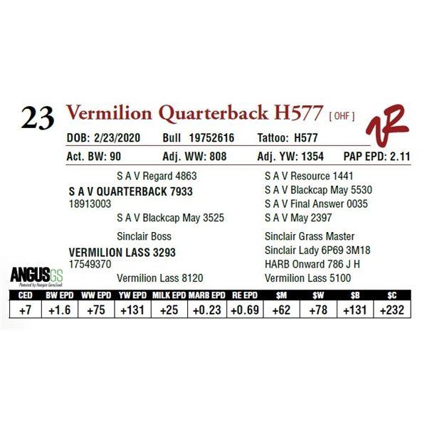 VERMILION QUARTERBACK H577