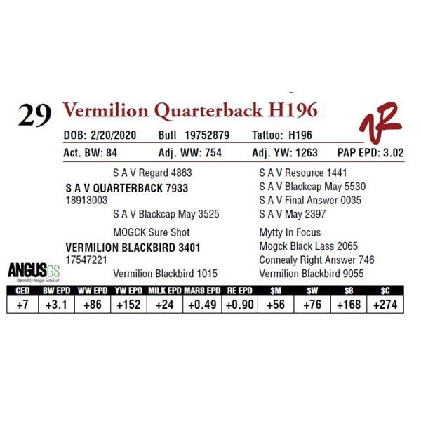 VERMILION QUARTERBACK H196