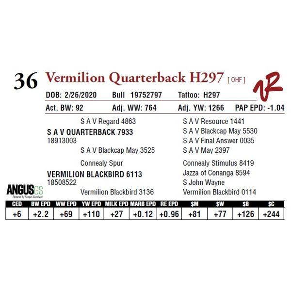 VERMILION QUARTERBACK H297