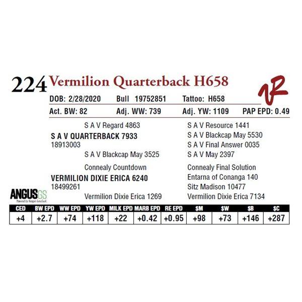 VERMILION QUARTERBACK H658