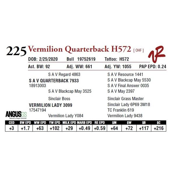 VERMILION QUARTERBACK H572