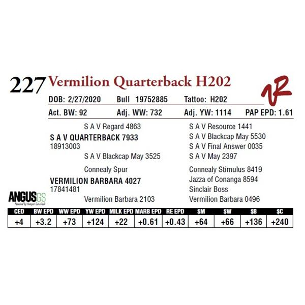 VERMILION QUATERBACK H202