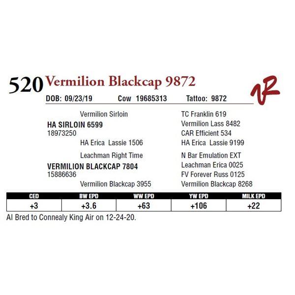 VERMILION BLACKCAP 9872