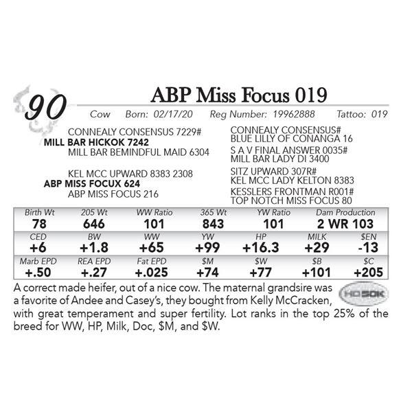 ABP Miss Focus 019