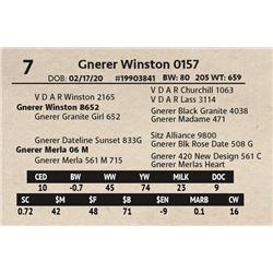 Gnerer Winston 0157