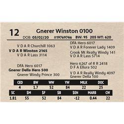 Gnerer Winston 0100